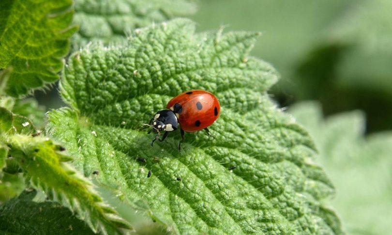 Comment attirer les insectes b n fiques dans votre jardin - Comment attirer des oiseaux dans son jardin ...