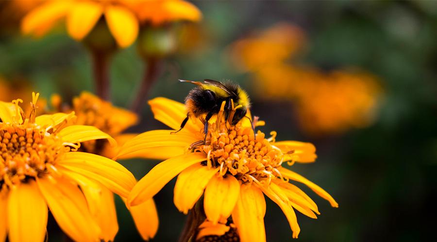 comment attirer les abeilles dans votre jardin. Black Bedroom Furniture Sets. Home Design Ideas