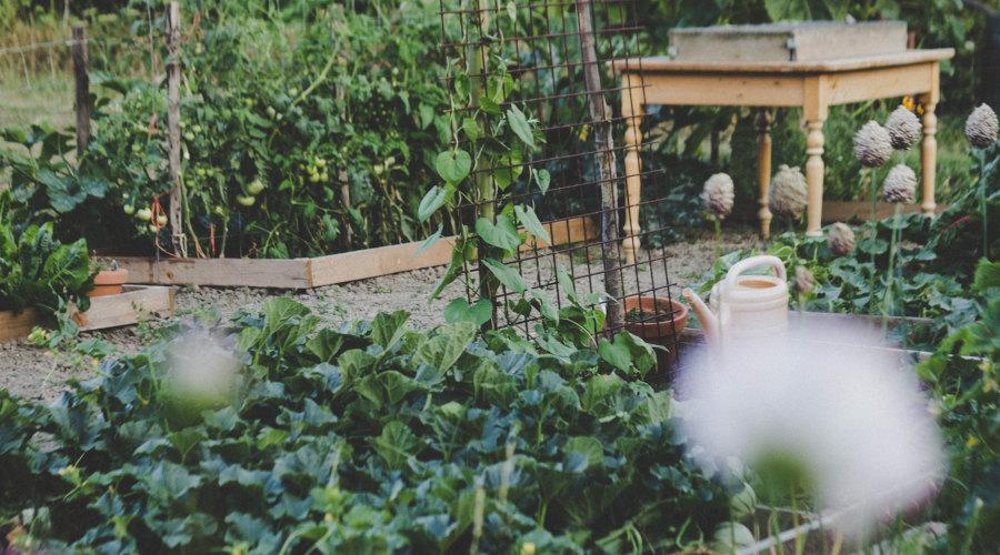 comment obtenir un jardin plus productif